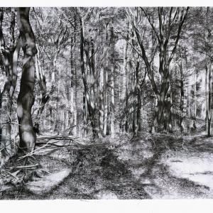 Kees van de Knaap 2020, Tangled wood 3